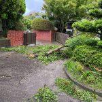 新西方保育園園庭1